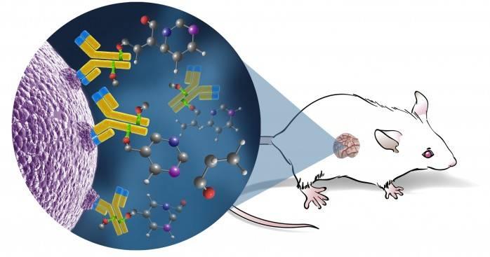 هموار کردن ایمنی درمانی سرطان کولورکتال