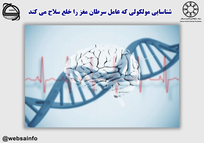 شناسایی مولکولی که عامل سرطان مغز را خلع سلاح می کند