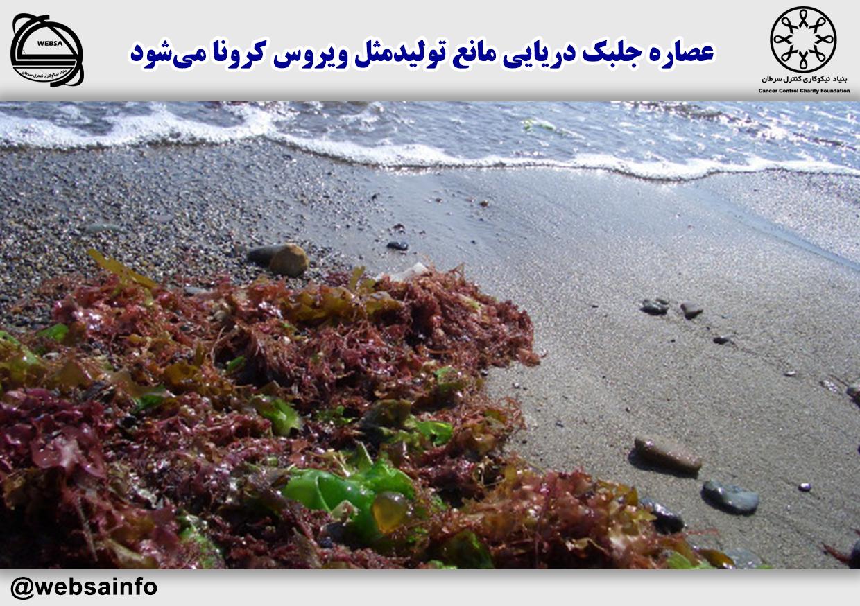 عصاره جلبک دریایی مانع تولیدمثل ویروس کرونا میشود